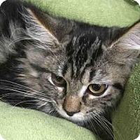 Adopt A Pet :: MORGAN - Wainscott, NY