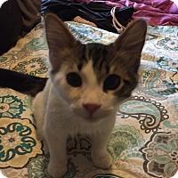 Adopt A Pet :: Prince - Sacramento, CA