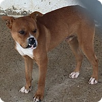Adopt A Pet :: Hobbs - Pulaski, TN