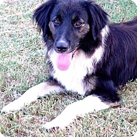 Adopt A Pet :: Missy - E. Greenwhich, RI