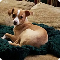 Chihuahua Mix Dog for adoption in DeForest, Wisconsin - Barbara