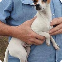 Adopt A Pet :: Katie - Gainesville, FL