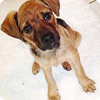 Adopt A Pet :: Iris - E. Greenwhich, RI