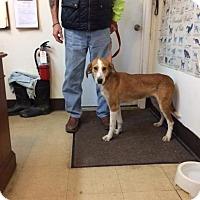 Adopt A Pet :: Ginger - DuQuoin, IL