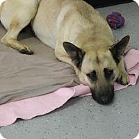 Adopt A Pet :: Darwin - Phoenix, AZ