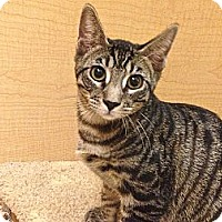 Adopt A Pet :: Andy - Foothill Ranch, CA