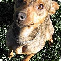 Adopt A Pet :: Baby Gizelle - Oakley, CA
