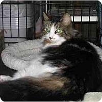 Adopt A Pet :: Levi - Westfield, MA