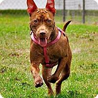 Adopt A Pet :: Nora (Ginger) - Orlando, FL