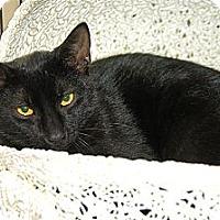 Adopt A Pet :: Reid - Victor, NY