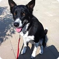 Adopt A Pet :: Layla - Saskatoon, SK