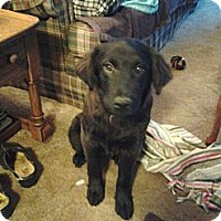 Adopt A Pet :: Hootie - PENDING, in Maine - kennebunkport, ME