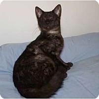 Adopt A Pet :: Ramses - Naples, FL