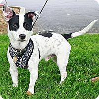 Adopt A Pet :: Koa fun boy - Sacramento, CA