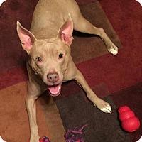 Adopt A Pet :: Merry - Davison, MI
