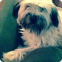 Adopt A Pet :: Stella in IL - North Kansas City, MO