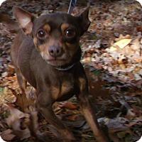 Adopt A Pet :: Ozzi - Muskegon, MI