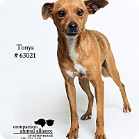 Adopt A Pet :: Tonya (Foster) - Baton Rouge, LA