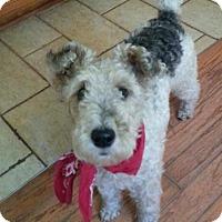 Adopt A Pet :: Foxy Babe - Alexandria, KY
