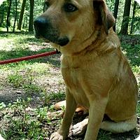 Adopt A Pet :: Brown Eyed Girl - Capon Bridge, WV