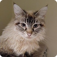 Adopt A Pet :: Appollonia - Hurst, TX