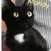 Adopt A Pet :: Mandy - Putnam, CT