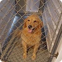 Adopt A Pet :: Mater - Crocker, MO