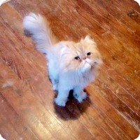 Adopt A Pet :: Rocky - Marlton, NJ