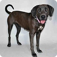 Adopt A Pet :: IVYSAUR - Martinez, CA