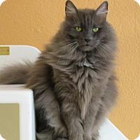 Adopt A Pet :: Jamaica - Fargo, ND