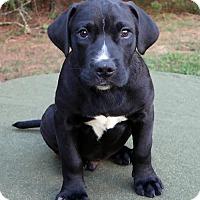Adopt A Pet :: Leno - Rockingham, NH