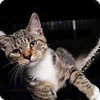 Adopt A Pet :: Hatch - Tomball, TX