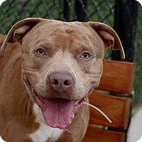 Adopt A Pet :: Rocky - Yonkers, NY