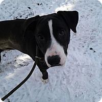 Adopt A Pet :: Buster - Cokato, MN