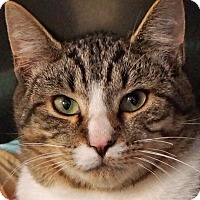 Adopt A Pet :: Ted - Sprakers, NY