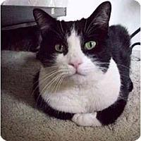 Adopt A Pet :: Chucho - Mesa, AZ