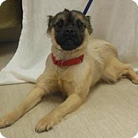 Adopt A Pet :: Max - Gary, IN