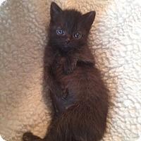 Adopt A Pet :: Anna - Union, KY