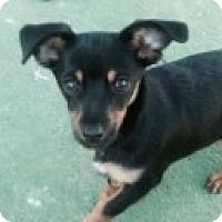Adopt A Pet :: CONNER 2-14 @ Petsmart SLO - Atascadero, CA