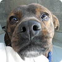 Adopt A Pet :: Honey~URGENT!! - Franklin, KY