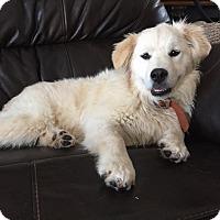 Adopt A Pet :: Dora Belle - Ascutney, VT