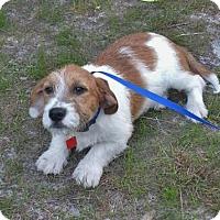 Adopt A Pet :: East (Finn) - Orlando, FL