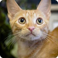 Adopt A Pet :: Rocket - Coral Springs, FL