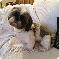 Adopt A Pet :: HALEY-pending - Eden Prairie, MN