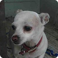 Adopt A Pet :: A565267 - Oroville, CA