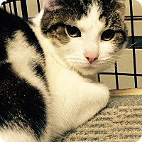 Adopt A Pet :: Lucy - Fairborn, OH