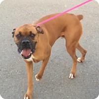 Adopt A Pet :: Samson - Reno, NV