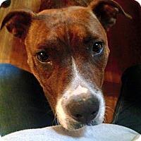 Adopt A Pet :: Sally Mae - Glenside, PA
