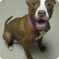 Adopt A Pet :: Ruby - Gary, IN