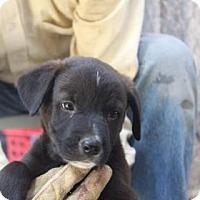 Adopt A Pet :: Grumpy - Tucson, AZ